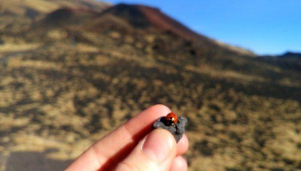 aetna vulkan marienkaefer catania tipps