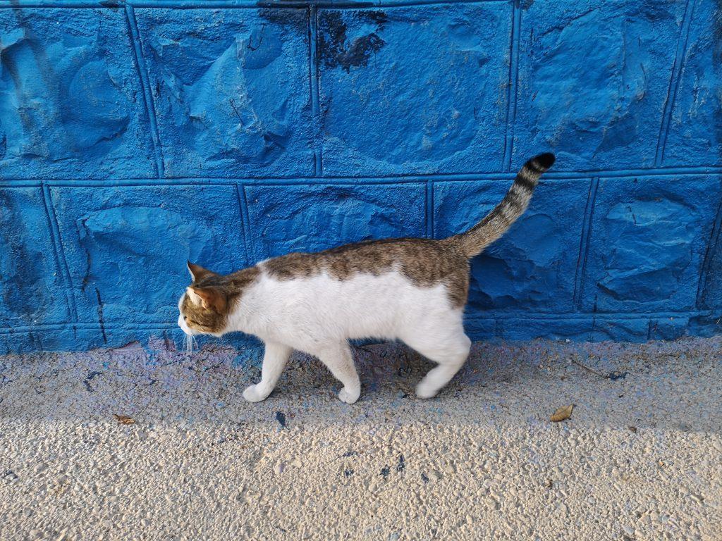 Teheran-Tipps-Katzen