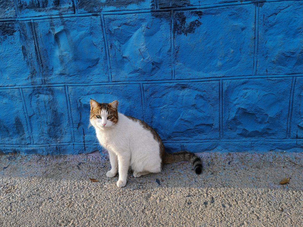 Teheran-Tipps-Katzen-in-Teheran