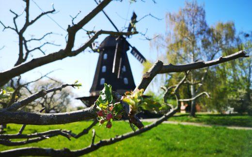 Windmuehle in Britz im Fruehling