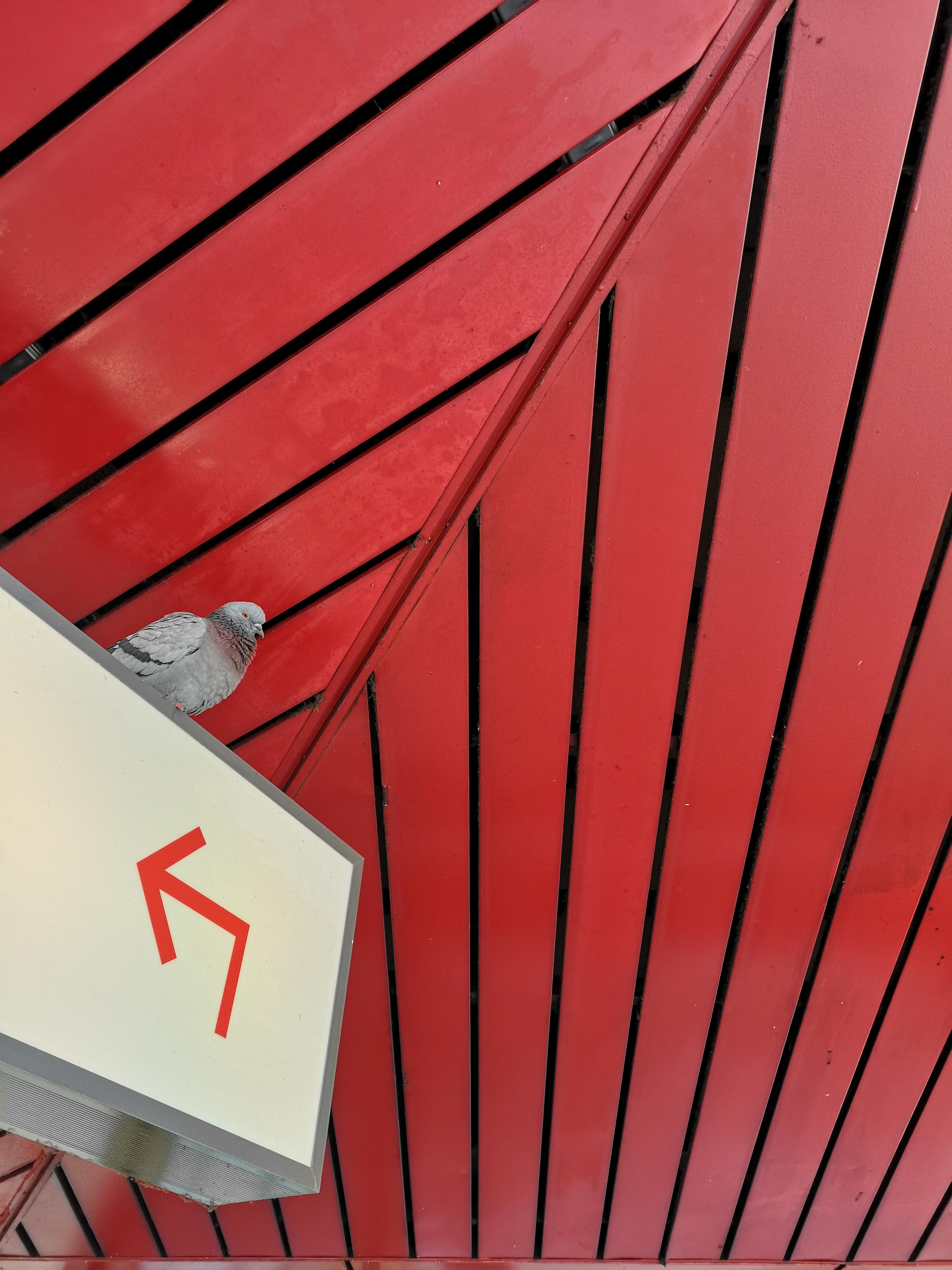 Flughafen-Tegel-Berlin-Schliessung-Taube