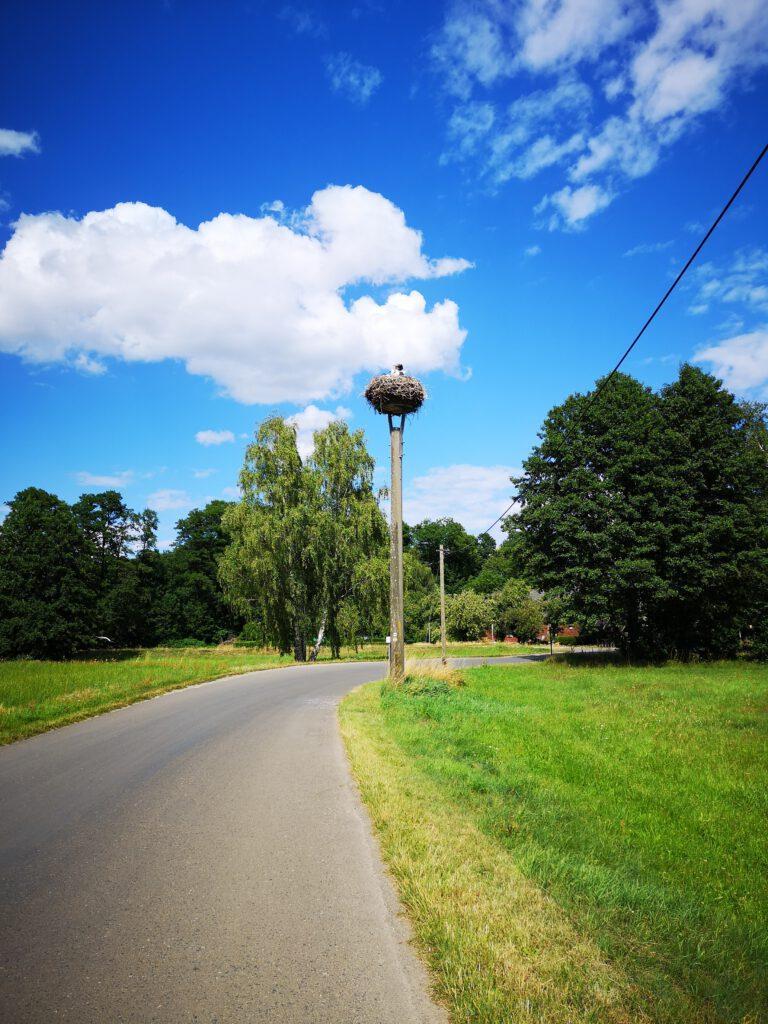 ahrrad-fahren-Radtour-im-Spreewald-Stoerche fahrradtour spreewald