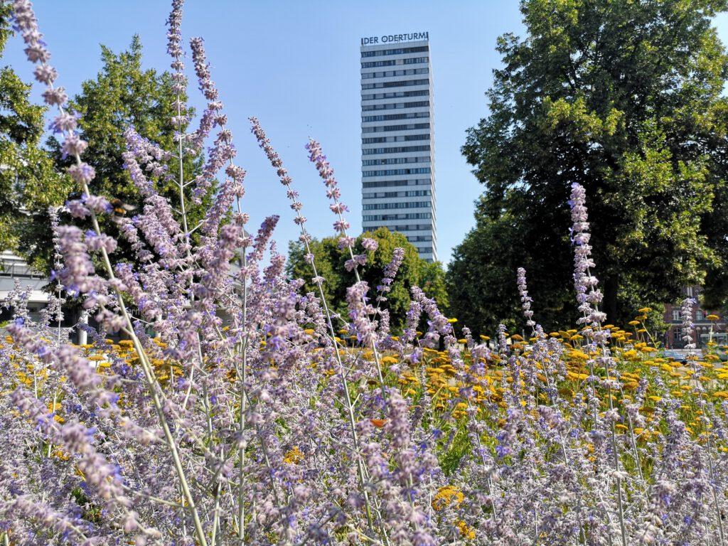 Frankfurt-Oder-Tipps-Oderturm