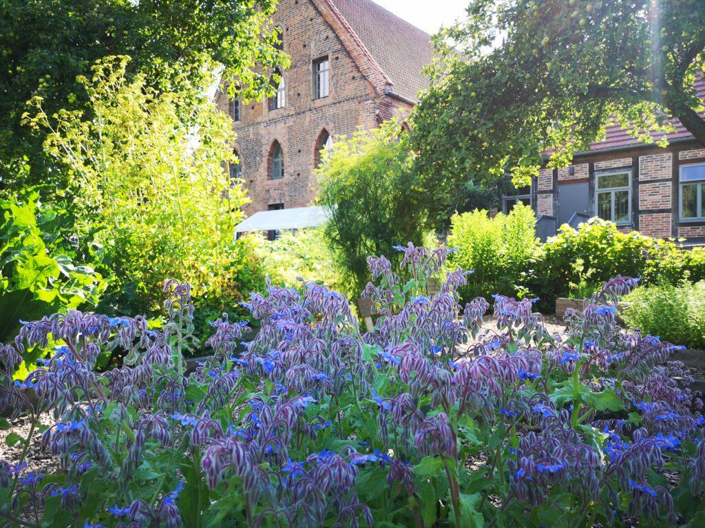 Kuelungsborn-Urlaub-Klostergarten-Blumen-Pflanzen