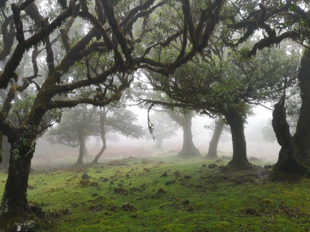 Madeira-Tipps-Feenwald-Fanal-alte-Lorbeerwaelder
