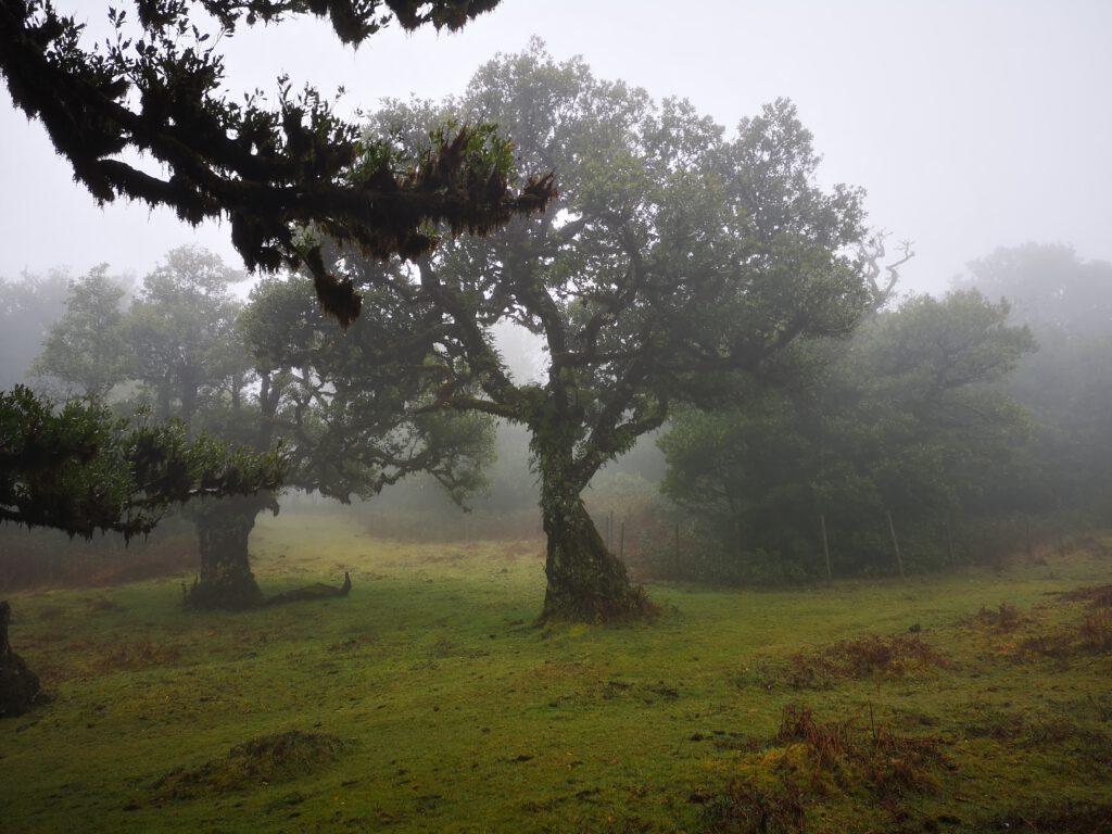 Madeira-Tipps-Feenwald-Lorbeerwald-Fanal