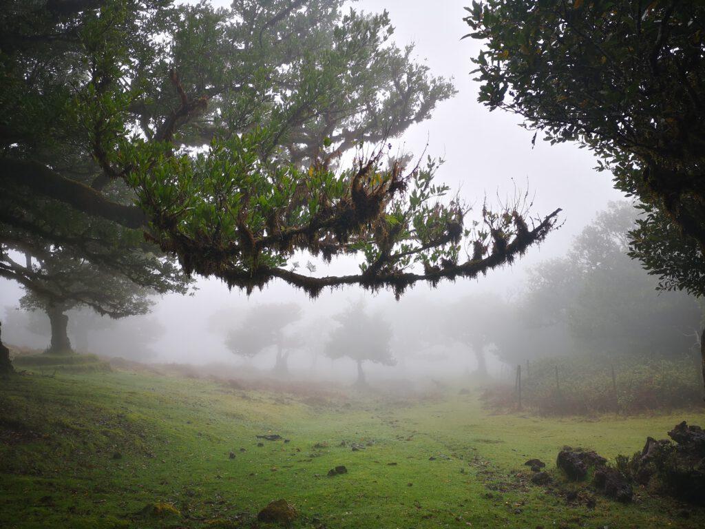 Madeira-Tipps-Feenwald-Nebel