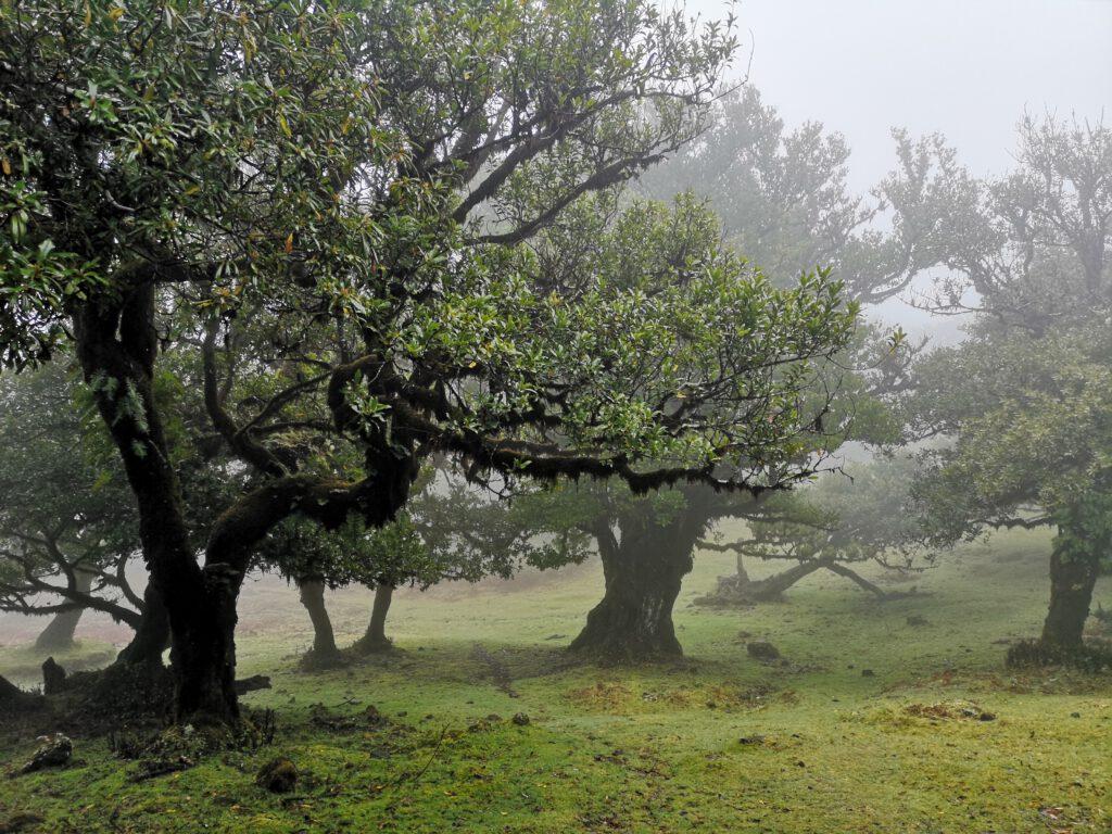 Madeira-Tipps-Lorbeerwald