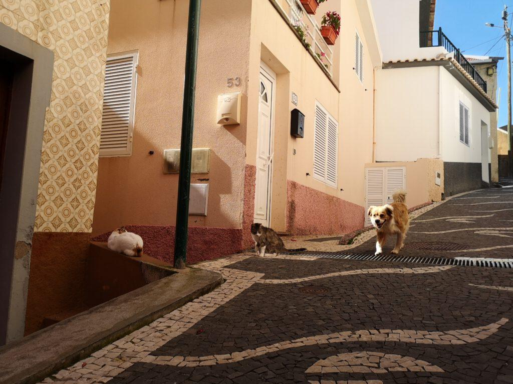 Madeira-Tipps-Paul-de-Mar
