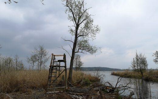 Moor Fahrland am Fahrlander See